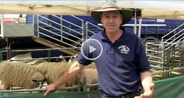 *Video:the sheep show intro